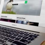 """Getty Images öffnet Bilddatenbank für """"freie"""" Verwendung"""
